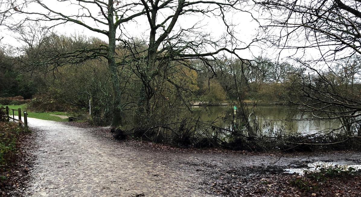 Rain Walk Pond 2